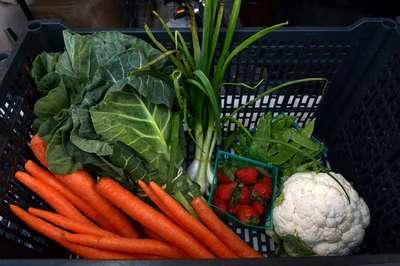 veggie-box-closeup
