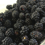 This is a simply image of a pile of blackberries.