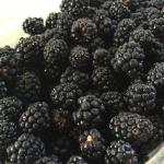 Blackberries for website